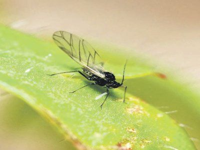 Если муха – муху бей!